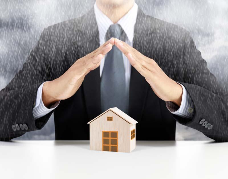 Chute d'arbre et assurance habitation